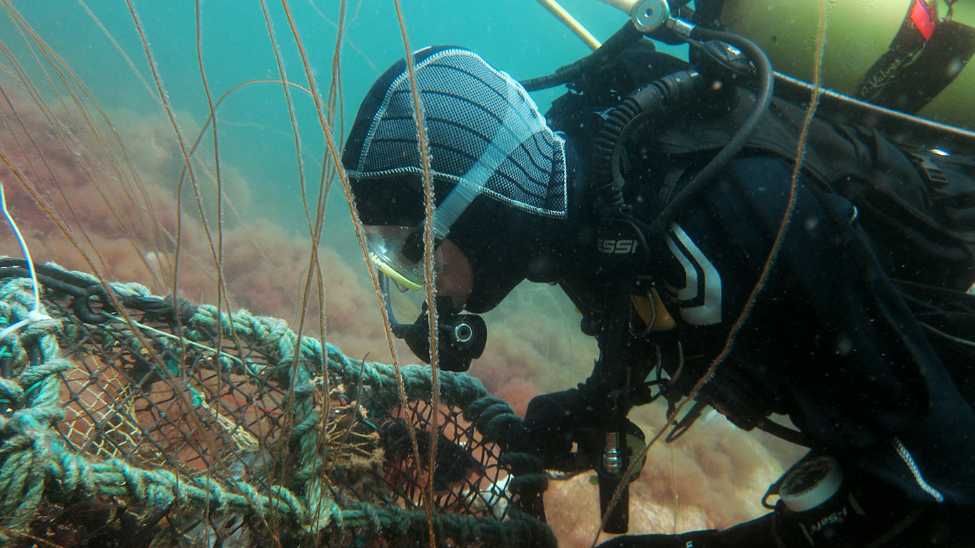 Scuba diver underwater inspecting a lobster pot