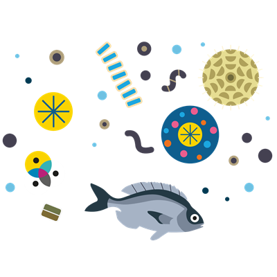 Fish and plankton illustration